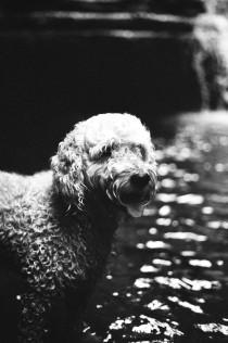 Koiran kanssa vesiputouksella